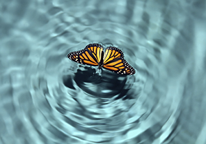 New Life Ripples Out Through Spiritual Growth and Development
